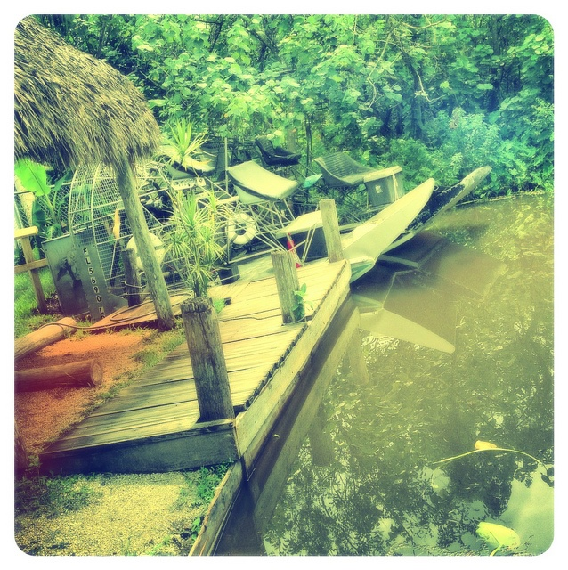 Swamp Boat Tours West Palm Beach