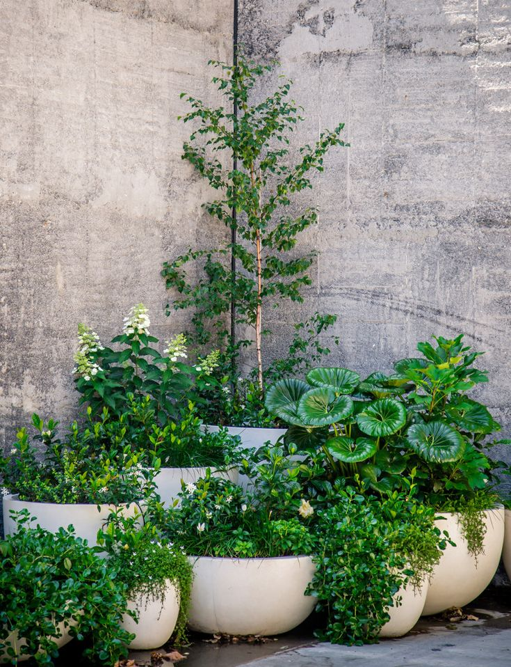 How to make interiors look more lively with indoor plants - Homes To Love