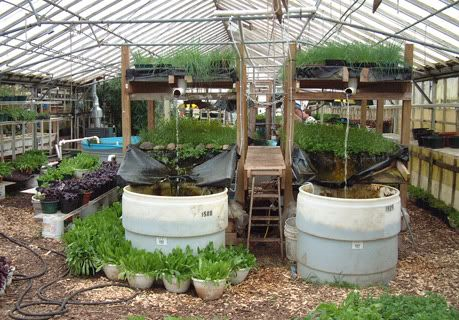 Growing Power are growing 1 million pounds of food on 3 acres of land in green houses, grow all year using heat from compost piles, utilises vertical space,10,000 fish, & 300-500 yards worm compost.