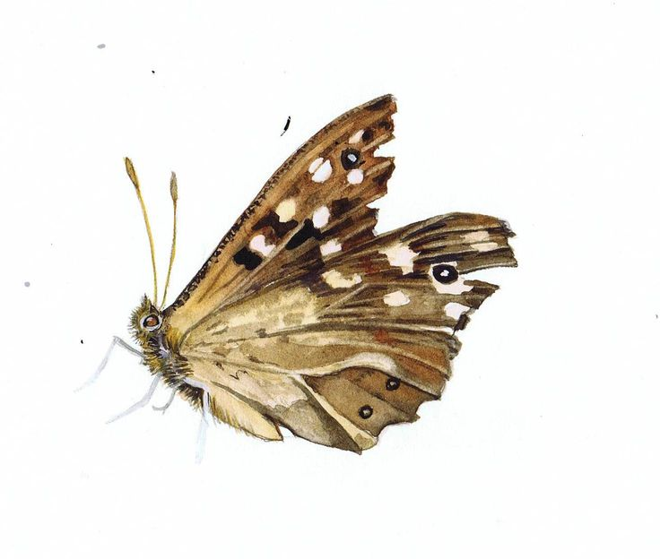 Realistic butterfly paintings - photo#26