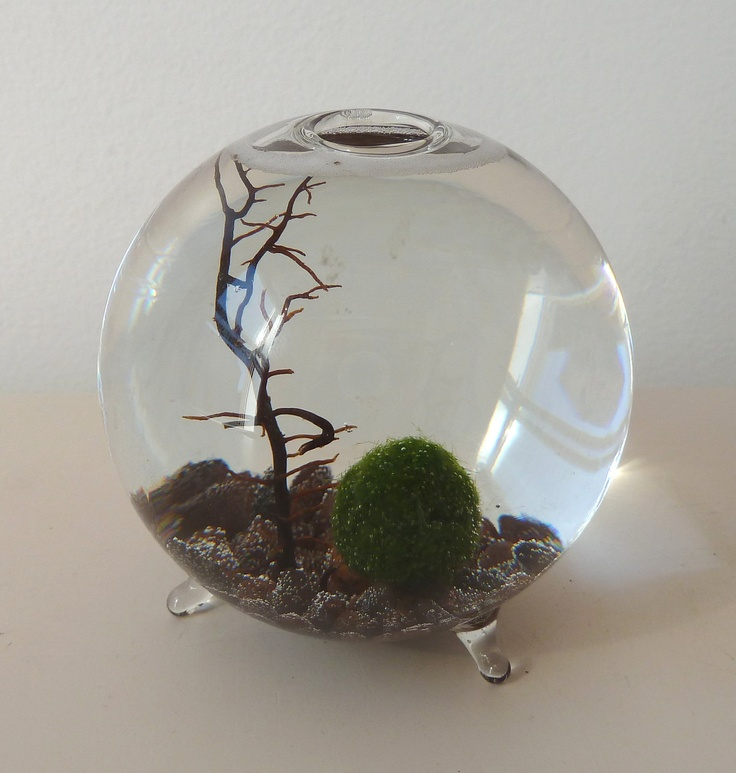 35 best aquariums images on pinterest fish tanks for Marimo moss ball