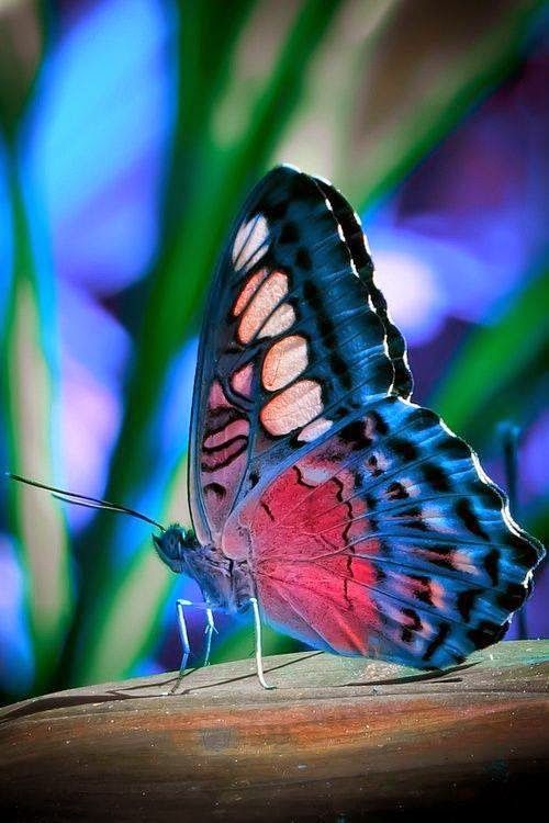 Cute Butterflies pictures free download || Beautiful Butterflies Wallpapers…