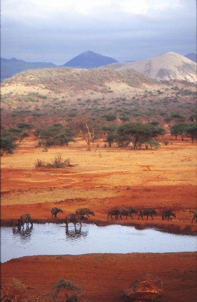 Parque nacional de Tsavo, Kenia.