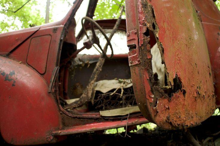 270 milliót érő kincs rohad elhagyva egy erdőben 3