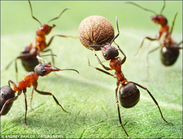 Unfair, they have SIX legs! Photographer uses skill (and patience) to capture…