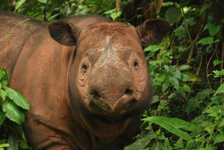 365 Best Images About Rhinos On Pinterest Horns African