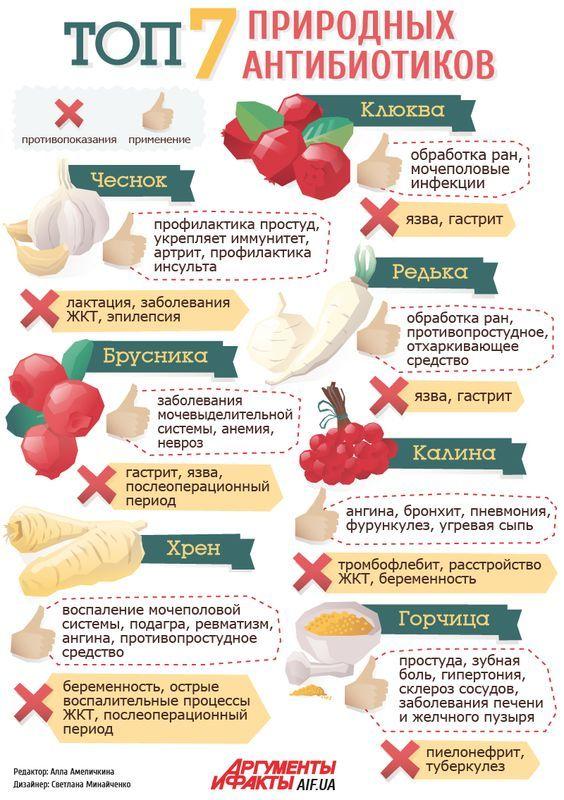 Топ-7 природных антибиотиков   Здоровая жизнь   Здоровье   АиФ Украина: