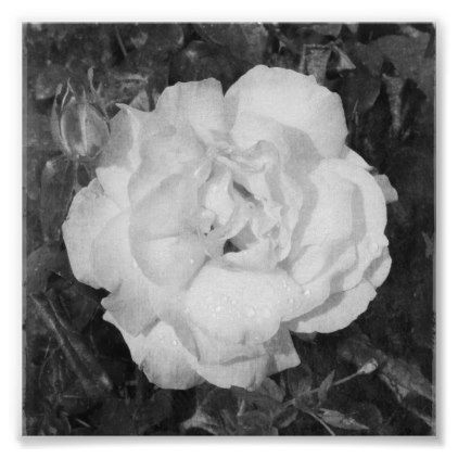Rose Flower B&W Floral Poster - photography picture cyo special diy