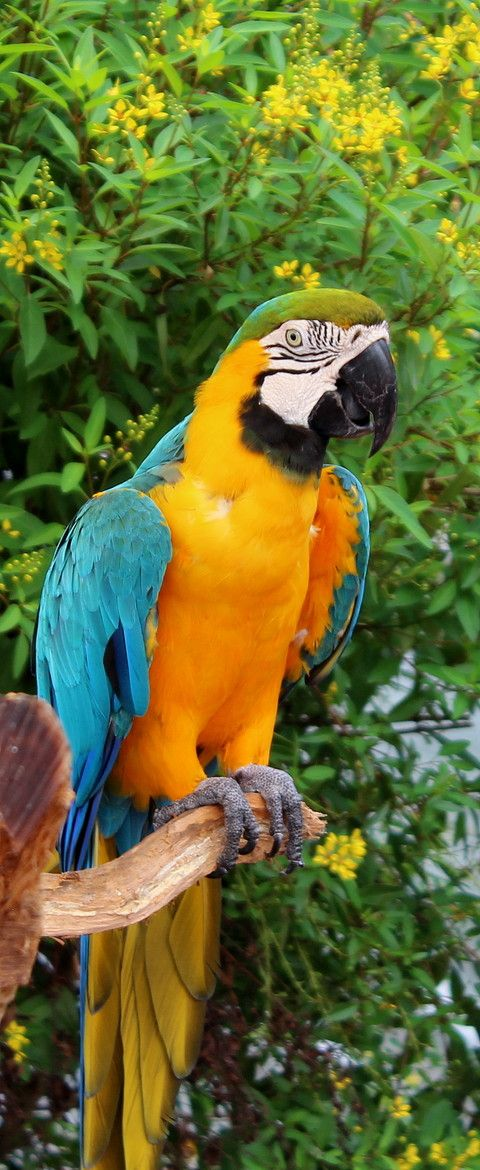 Brightly Colored Macaw At Butterfly World