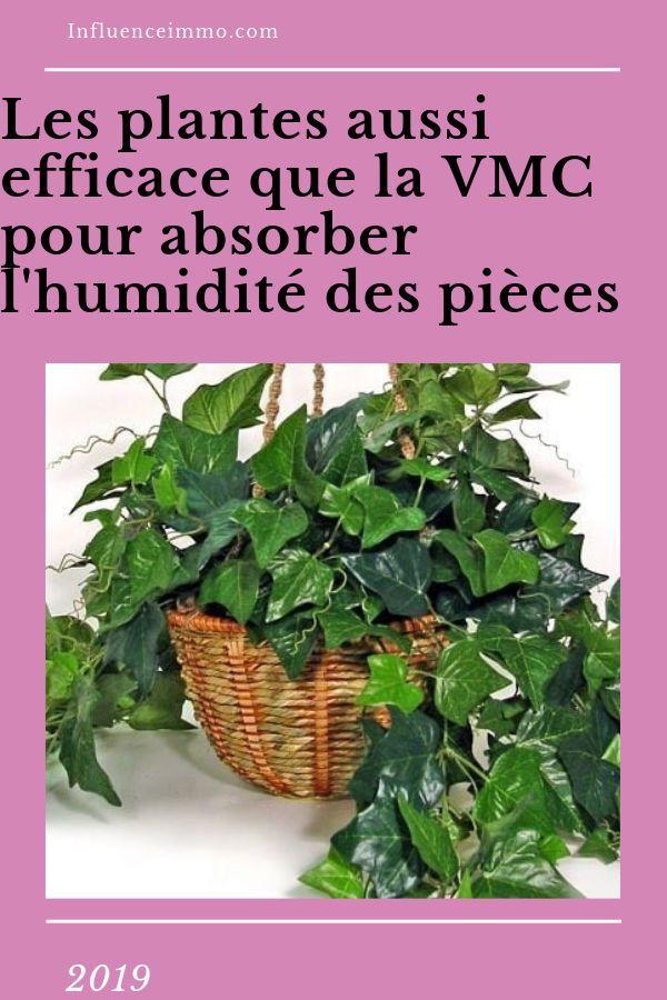5 Plantes Qui Absorbent L Humidite De Toutes Les Pieces Plante Plante Salle De Bain Deco Plantes Interieur