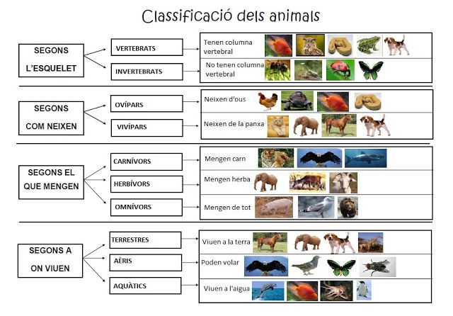 Classificació dels animals Blog Primer A Sa Marina