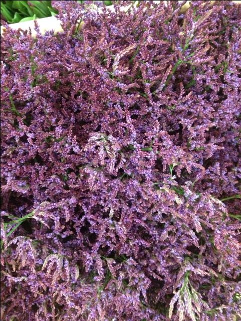 Limonium Piuma Dark Blue...Sold in bunches of 10 stems from the Flowermonger the wholesale floral home delivery service.