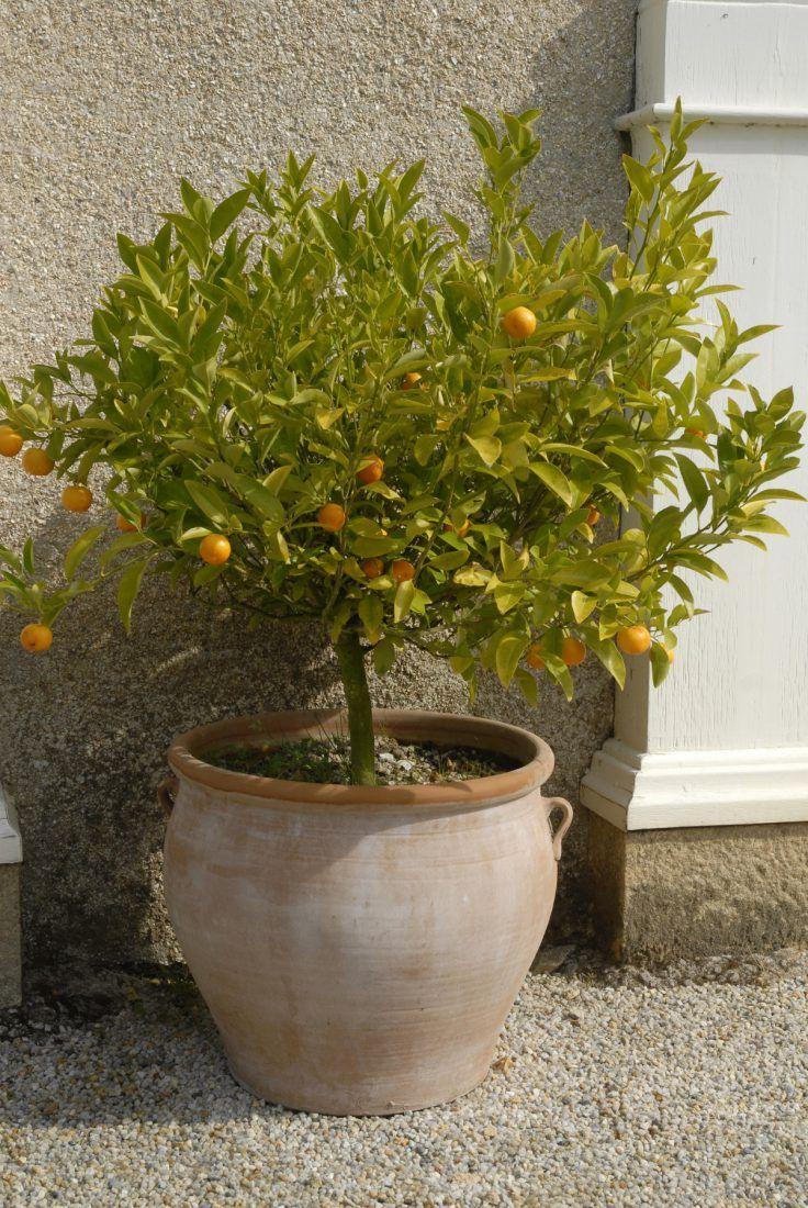 10 Arbres Fruitiers Pour Une Culture En Pot Youtube Espalier Fruit Trees Garden Containers Fruit Trees