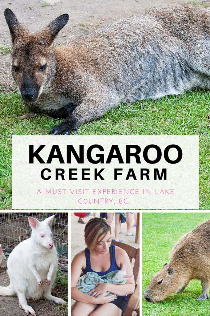 If you're visiting the Okanagan you have to check out the Kangaroo Creek Farm in Lake Country, BC (just outside Kelowna, British Columbia). Kids of all ages will love this educational farm, it's perfect for family travel.