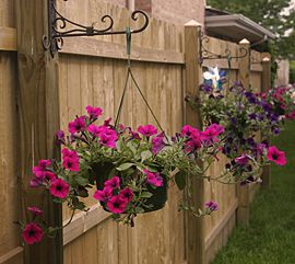 Decorate the inside of your fence with hanging baskets.  Cute idea. Instead of planting trees etc to fill up empty space by the fence, just hang flowers. Cheaper! Hit the pin for tips in the garden.