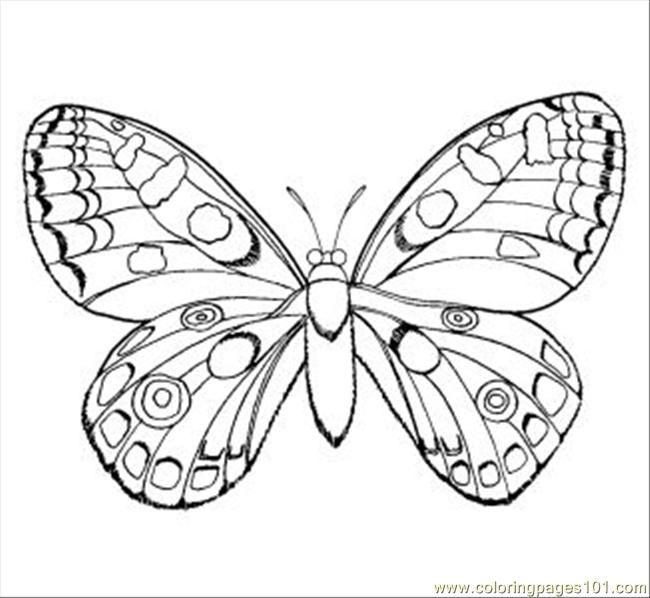 Printable Insects Coloring Sheets Pages Insect 12
