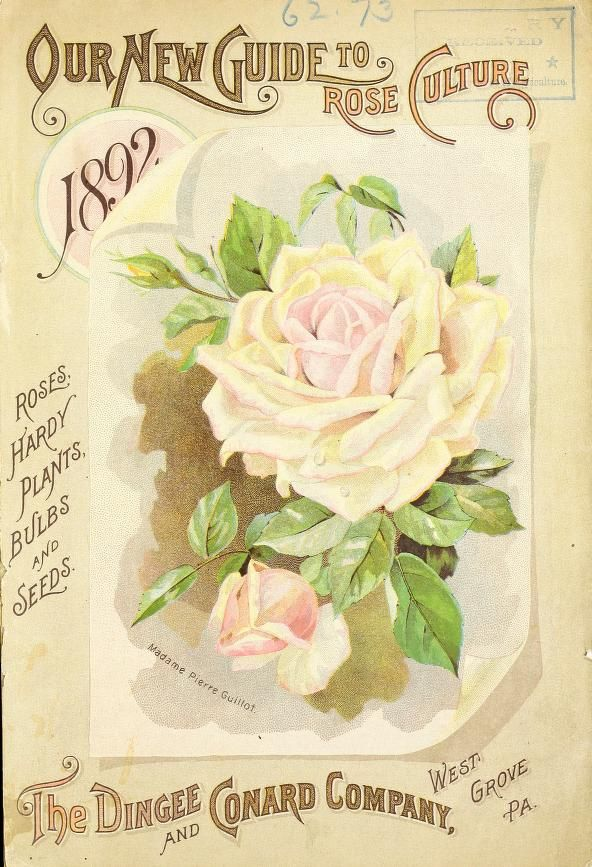 1892 - Our new guide to rose culture : - Biodiversity Heritage Library