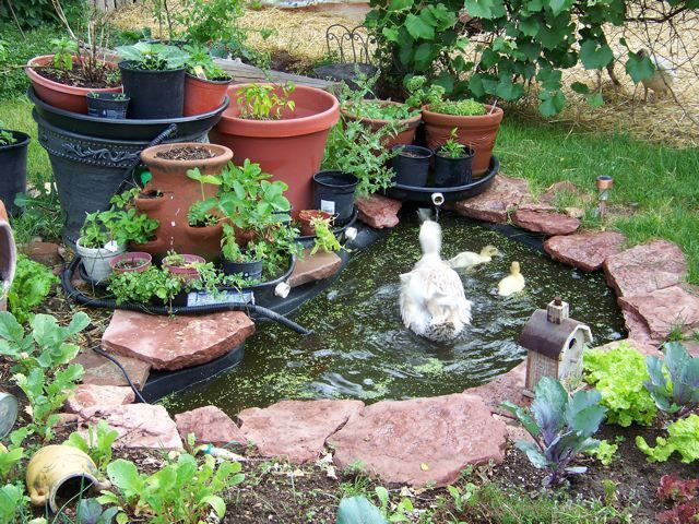 images about DUCKS on Pinterest  Raising, Duck coop and Duck pens