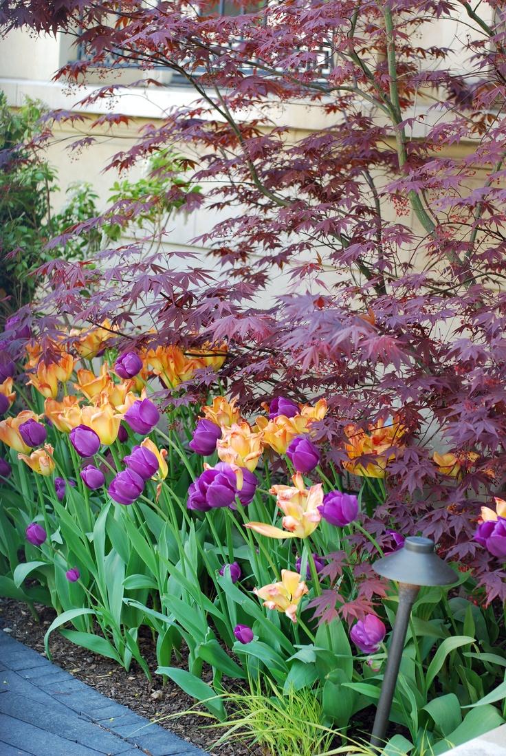 26 best my virtual garden images on pinterest