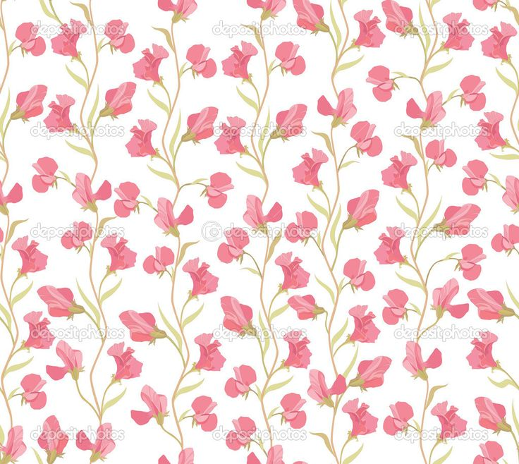 modello senza saldatura con lilla e rosa fiori piselli dolci su sfondo bianco - Illustrazione Stock: 24519939