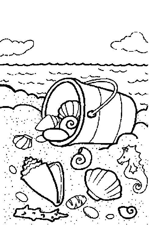 Thema water en zand : schelpen