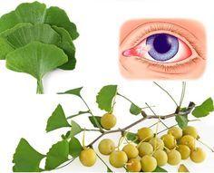 El extracto de Ginkgo Biloba es muy rico en nutrientes y nos puede ayudar a tratar un gran número de problemas de salud. Las hojas de Ginkgo Biloba contienen dos tipos de antioxidantes muy potentes, los flavonoides y los terpenoides. Los antioxidantes tienen un papel muy importante a la hora de prevenir el desarrollo de …