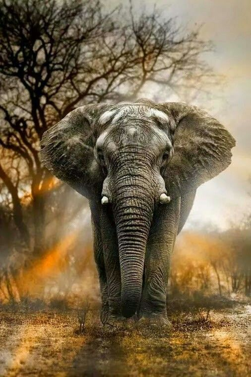 Beautiful animal and very wise.. by elephants are always females who lead!