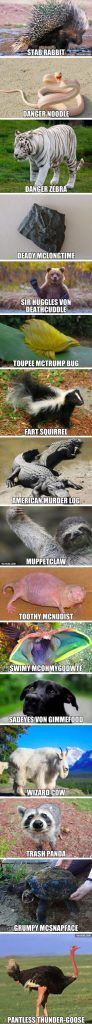 47-funny-pictures-youre-going-to-love-029