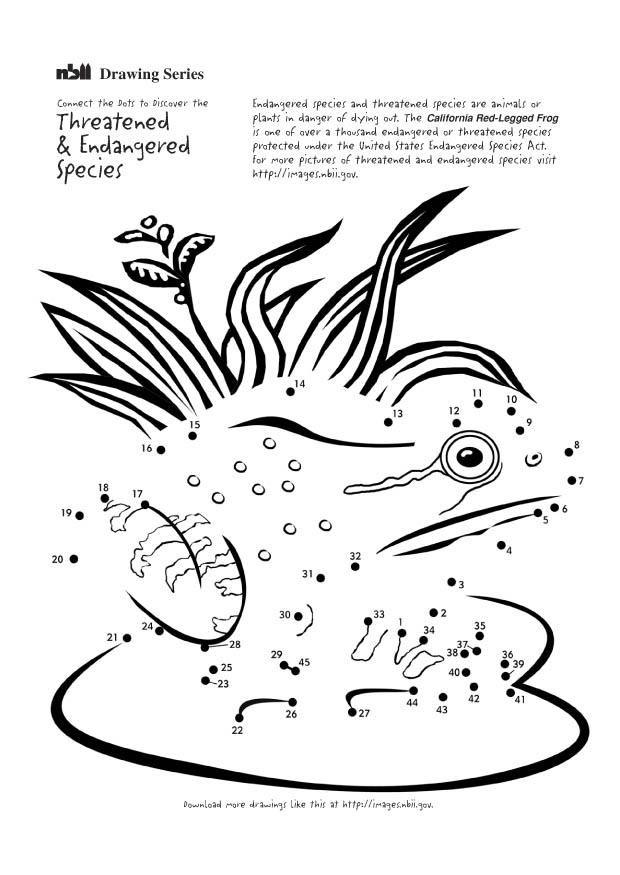Ten Grossartig Malvorlage Frosch Anschauung 2020 In 2020 Anschauung Malvorlagen Frosche Im Teich