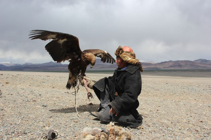 Training an Eagle in Western Mongolia