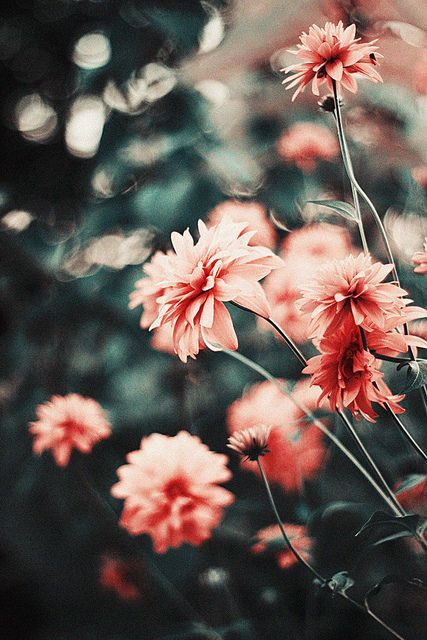 pretty pink flowers. dark grey background. #etsy #photo #photography   RP » 3   Flickr – Photo Sharing!
