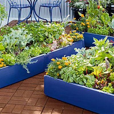 69 best raised bed images on pinterest vegetable garden potager garden and vegetables garden. Black Bedroom Furniture Sets. Home Design Ideas