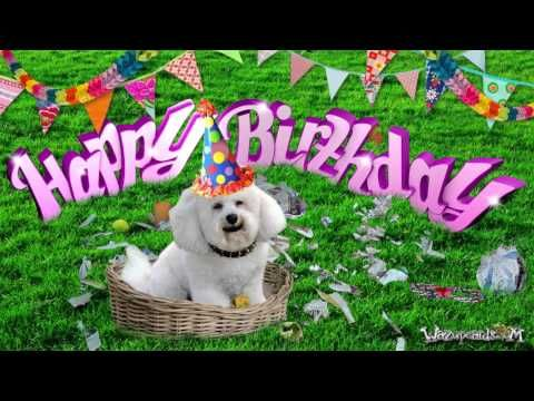 American Greetings Dogs Happy Birthday Video Youtube