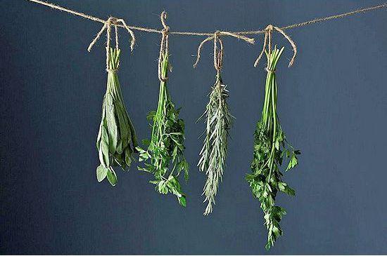 Ervas aromáticas e especiarias: a intemporal magia dentro das nossas cozinhas | SAPO Lifestyle