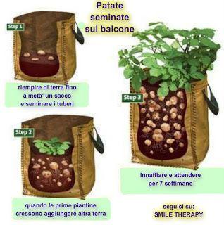 Coltivare le patate nei sacchi