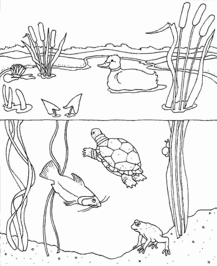 Pond Animals Coloring Pages Pond Animals Coloring Pages