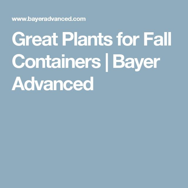 Great Plants for Fall Containers | Bayer Advanced