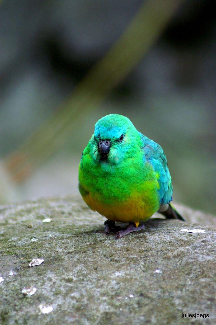 Cute little parrot