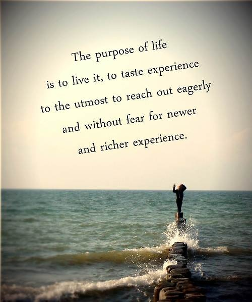 Life Purpose Quotes Enchanting 28 Best Life Purpose Images On Pinterest  Inspire Quotes Life