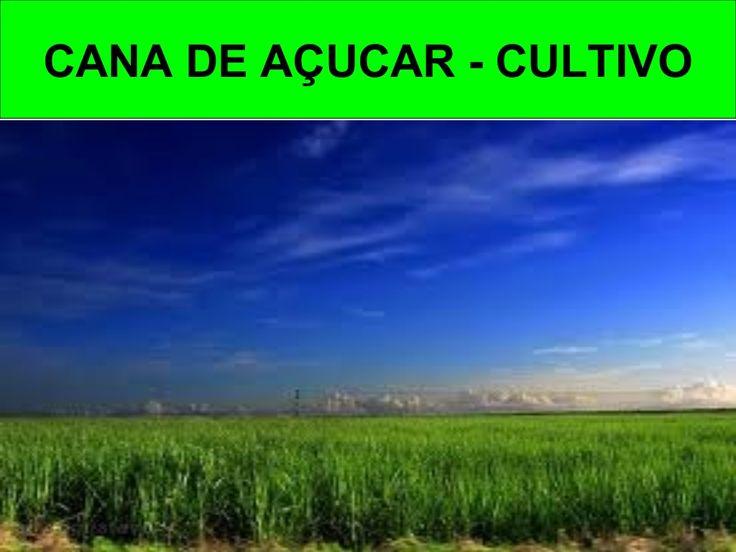 PROF. LUIZ HENRIQUE - Cana de açucar cultivo by Daniel Mota via slideshare
