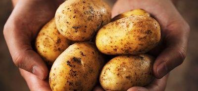 Niezwykłe właściwości zdrowotne zwykłego ziemniaka