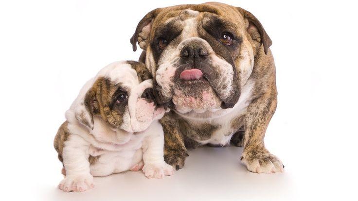 Καθρέφτης σου είμαι, μαμά μου... - http://ipop.gr/ipops-cue/kathreftis-sou-ime-mama-mou/
