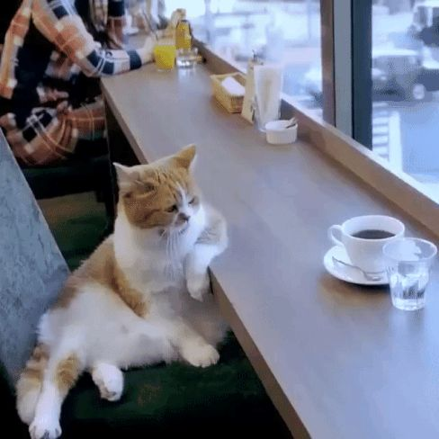 Coffee Cat is Contemplating The Meaning of Having Nine Lives. #feelings #cat #gif