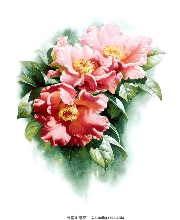 Ботанические рисунки Zeng Xiao Lian.