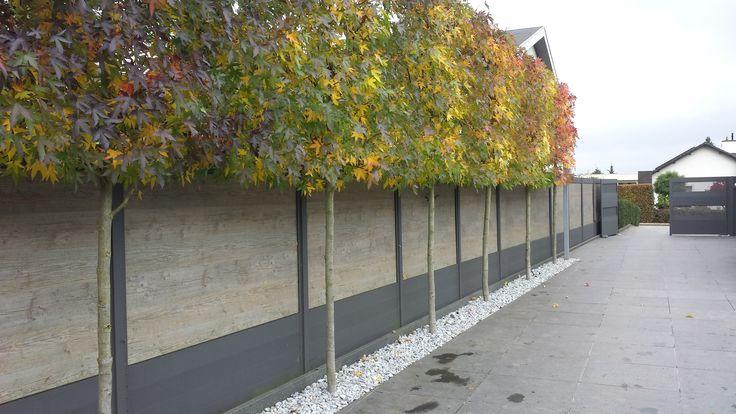 Leis Landscaping Yard : Liquidambar styraciflua in leivorm moderne tuinen