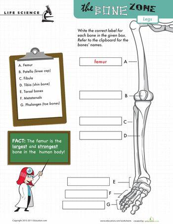 Worksheets: Learn the Bone Zone: Legs