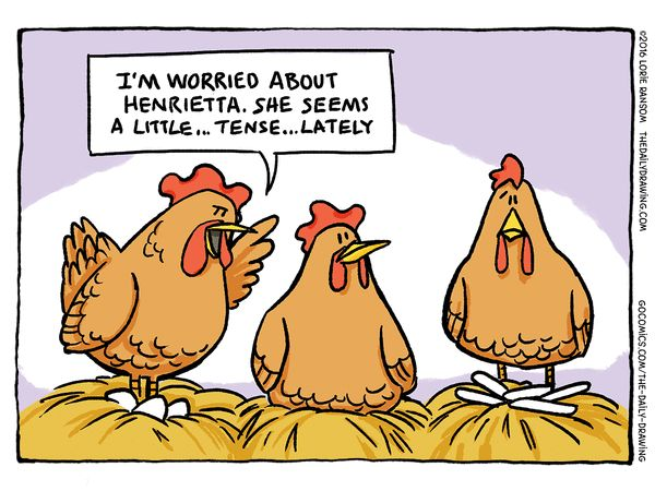 Funny Chicken Cartoons: 1000+ Images About Chicken Humor On Pinterest