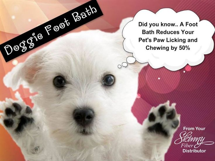 Did you know... Foot Bath Reduces Your Pet's Paw Licking and Chewing by 50%? According to Dr. Karen Becker on http://healthypets.mercola.com/sites/healthypets/archive/2011/10/25/dog-foot-bath.aspx  Here is a video explaining how to do a Doggie Foot Bath. https://www.youtube.com/watch?feature=player_embedded&v=zb3bi-FQL2o  Dogs sweat from their noses and the pads of their feet, so they can pick up a heavy load of irritants.  Doggie Foot Bath Fill a tub with a few inches of water, just enough…