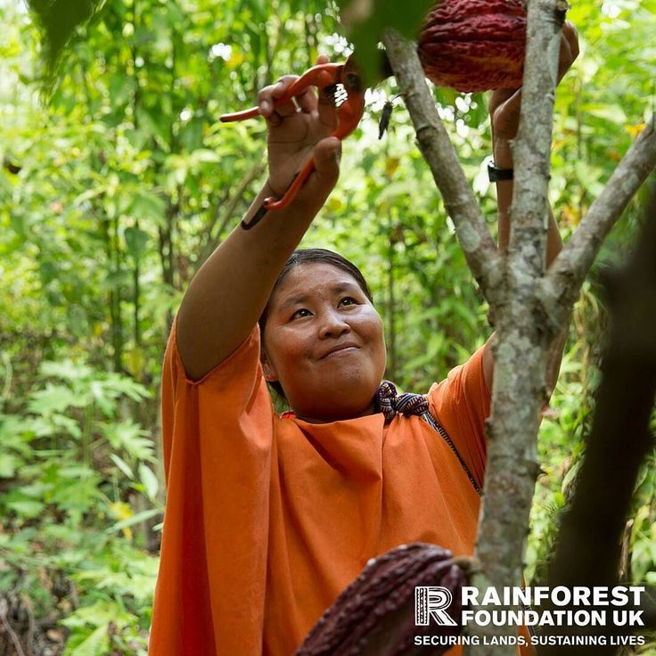 Happy #Easter! Give food income and the chance of a better future to Ashaninka families. Choose our rainforest chocolate e-gift today and help protect the Peruvian Amazon! http://ift.tt/1XW00gE With your support we can help Ashaninka communities generate a regular income by growing cocoa sustainably in the forest. #RFUK #indigenous #Peru #LatinAmerica #ashaninka #chocolate #cocoa #fruit #holiday #ethicalconsumer #environmentallyfriendly #ecofriendly #environment #conservation #rainforest…