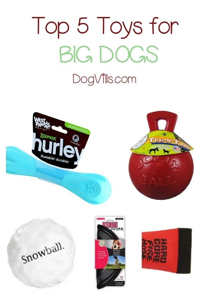 Looking for the best dog toys for big dogs for your Christmas shopping? Check out our picks for 5 great toys that won't fall apart the moment Fido's teeth touches them!